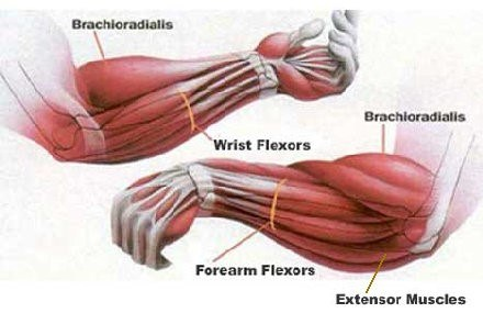 grip-anatomy.jpg#asset:1970